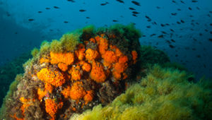 Lampedusa Immersioni
