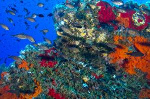 Immersioni e Snorkeling a Lampedusa
